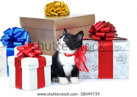 small cute kitten near gift boxes