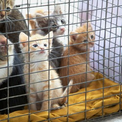 small cute kittens sit in an iron cage. Orphaned kittens, animal shelter