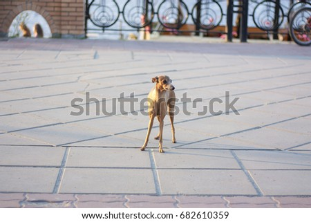 Small decorative dog #682610359