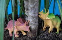 Small dinosaur Triceratops herbivore under a palm tree, under a tree. Two dinosaur toys model, Triceratops. Triceratops Jurassic ancient extinct dinosaur animal, paleontology.