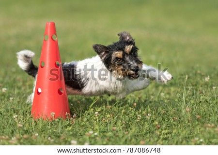 small dog circulates on a cone  ...