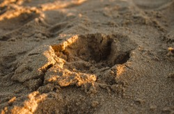 Small dog footsteps in the sand