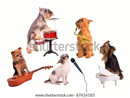 Small Dog jazz band funny performance in a studio