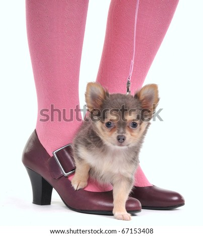 Small Dog on the Woman's feet