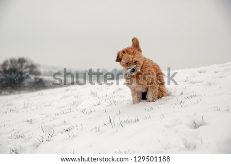 Small dog out in the cold