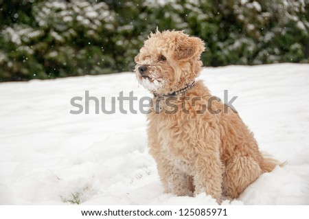 Small dog sitting in the deep snow