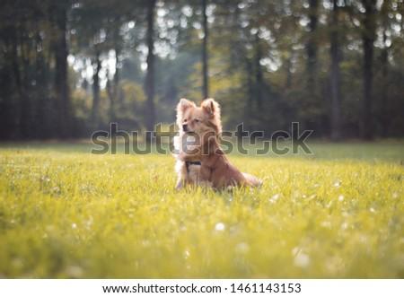 Small dog sitting in the grass enjoying the sun #1461143153