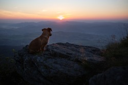 Small dog sitting on a rock and watch how sun comes up.  Dog and beautiful panoramic views. Brown dog on the peak. Hiking with dog.