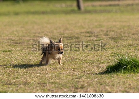 small dog takes a break during walking #1461608630