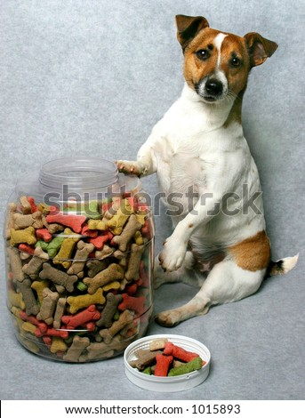 small dog with big container of dog cookies