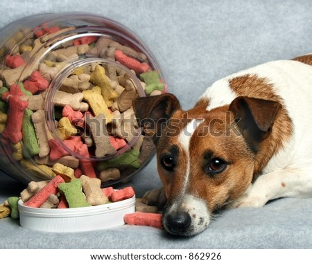small dog with big jar of dog buscuits
