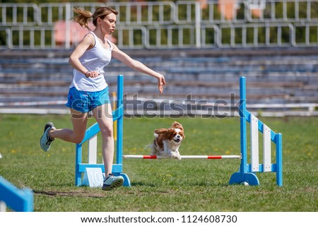 Small dog with handler jumping over hurdle in agility competition