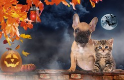 Small domestic kitten and french bulldog puppy sitting on a brick wall with pumpkin on halloween