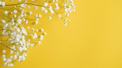 small dot flowers. white summer flower on yellow background with space for text. write you flower store message
