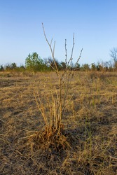 small dry bush in the autumn field against the background of a clear blue sky