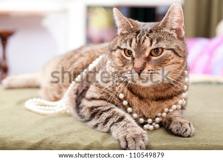 Small european cat wearing funny hat