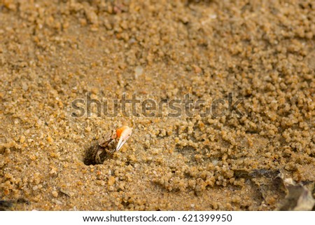 Small fiddler crab appearing casually out if its beach hole home.