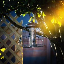 Small Finch feeding form garden feeder couaght summer glow