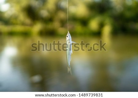 small fish hooked on a hook #1489739831