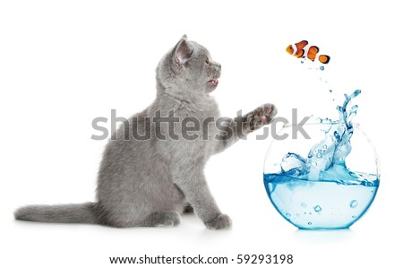 Small fish jumps out of an aquarium in paws of a kitten