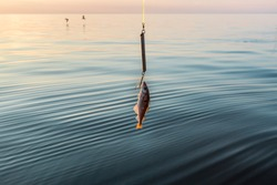 Small fish on a hook on the background of the sea, fishing at sunset. Concept of active lifestyle