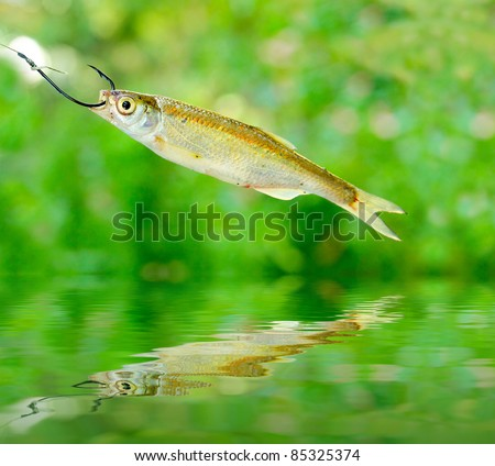 Small fish on the fishing hook over a water level. - stock photo
