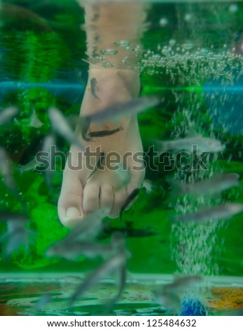 Small fishes in an aquarium do foot clarification