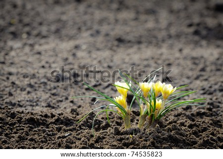 Small flower growth in a field