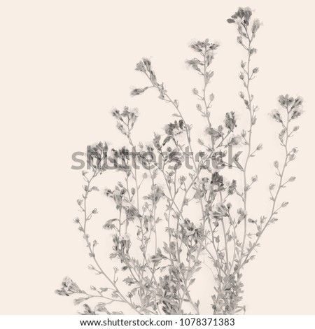 Stock Photo Small flowers bouquet on pink background. Pink and black wallpaper.