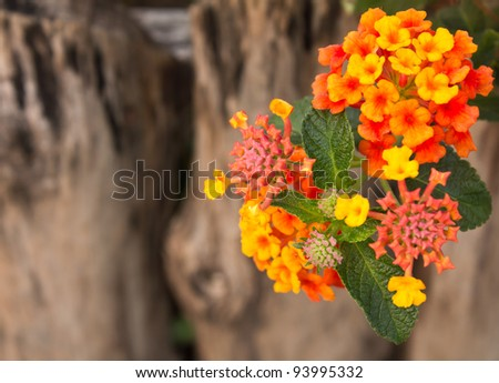Small flowers. Small, colorful flowers on a background of old wood.