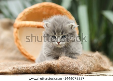 small, fluffy kitten and fur scarf. #1446075557