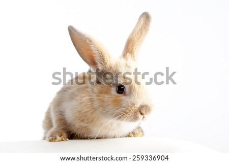 Small fluffy rabbit beige #259336904