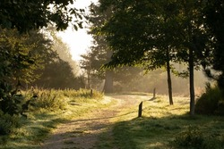 Small footpath in a magnificent wooded park in France. Beautiful golden morning light with white haze rising from the ground. Beautiful autumn morning with large oak trees and green foliage