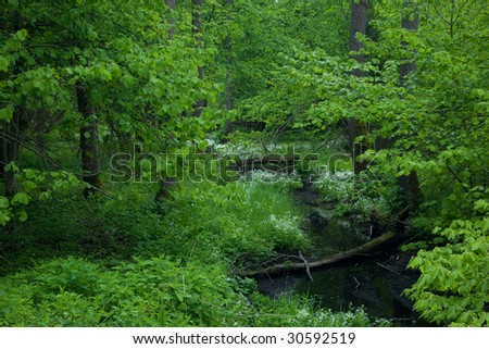 Small forest river crossing alder forest at springtime
