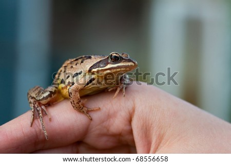 small frog sitting on mans hand