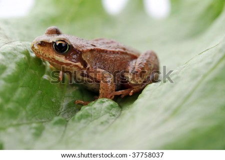 small frog very close up on leaf