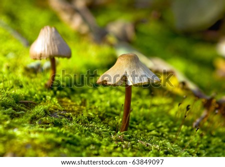 Small fungus growing in the green moss #63849097