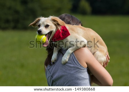 small funny dog with ball - stock photo