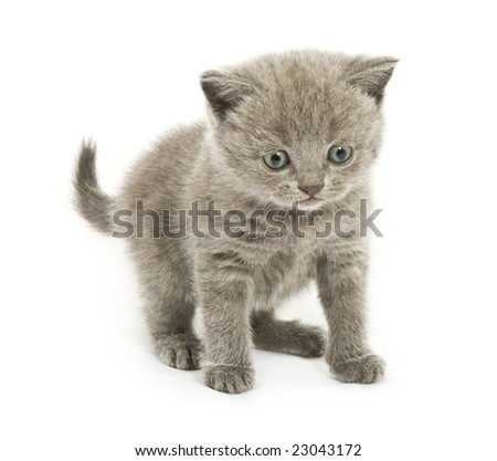 Small funny kitten. Isolated on white background