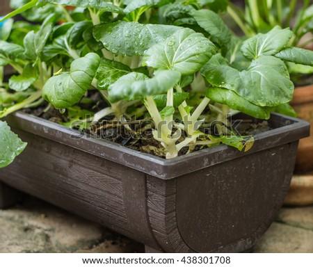 Small garden #438301708