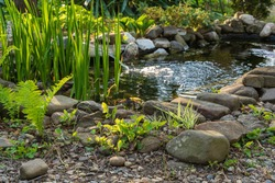 Small garden pond with stone shores and many decorative evergreens. Selective focus. Evergreen spring landscape garden. In foreground ostrich fern. Nature concept for design.
