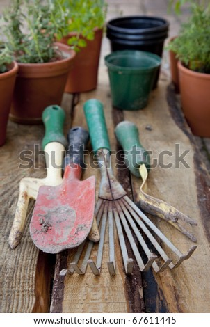 Small garden tools and potted herbs on a plant table.
