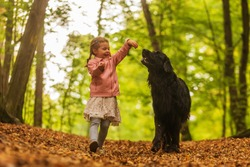 Small girl and big black dog hovawart are plying at the forest