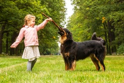 Small girl and dog hovawart are plying with the stick