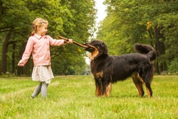 small girl is plying with dog female hovawart in the park