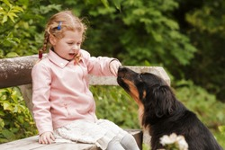 small girl is plying with dog hovawart and she has a lot of love her pet.