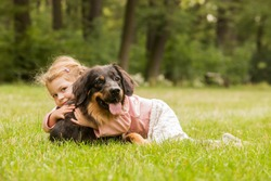 small girl is plying with dog hovawart in the grass