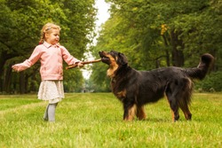 small girl is plying with dog hovawart she has stick