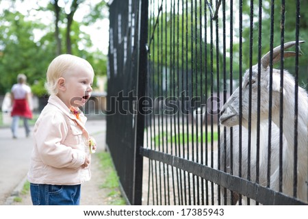 small girl looking at the goat at the zoo - stock photo