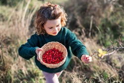 Small girl on a walk in nature, collecting rosehip fruit.
